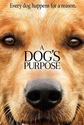 Xem phim Mục Đích Sống Của Một Chú Chó – A Dog's Purpose (2017)